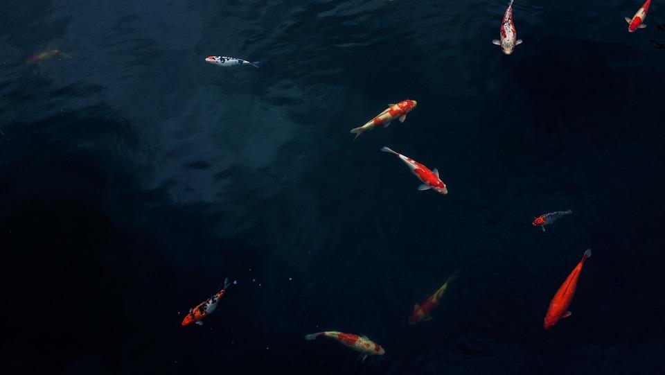 Тостолобика и белого амура выпустят в Измайловский пруд