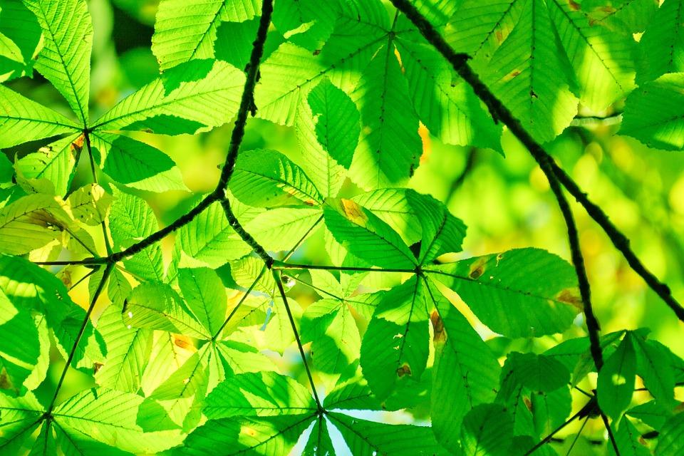 В лесопарке «Измайлово» прошел экологический марафон