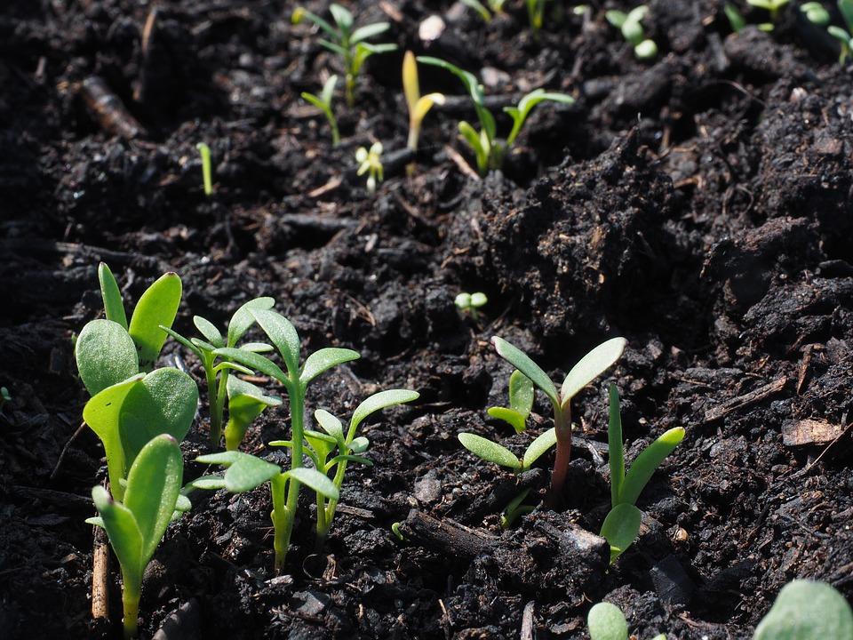 Жители ВАО смогут посадить деревце в парке