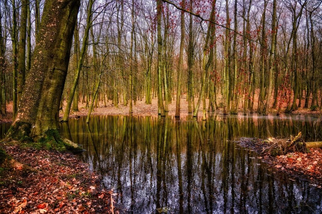 Жителей района приглашают на интерактивное занятие «Таинственный мир болот»