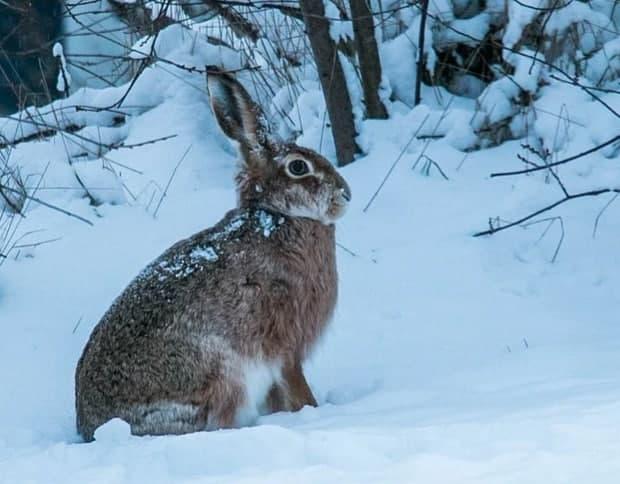 В Измайловском парке проведут акцию «Сытый заяц»