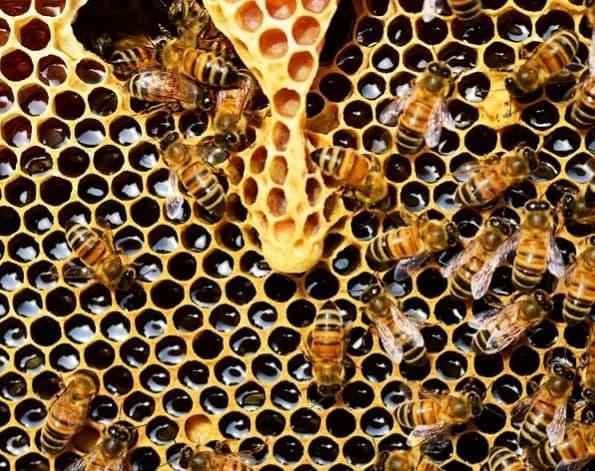 Семейный квест «Пчела ИзМая» устроят в «Измайловской пасеке»